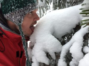 Tasting the freshly fallen snow off a spruce tree's branches