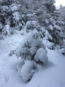 This tree with its snow-covered branches reminded me of a snowman. :)